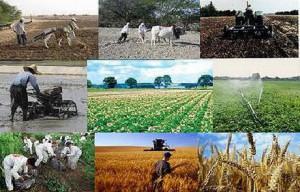 مدیر عامل بانک کشاورزی اعلام کرد تسویه بدهی دولت بابت بیمه کشاورزی تا ۱۰ روز آینده