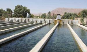 پرورش آبزیان در خوزستان ممنوع شد