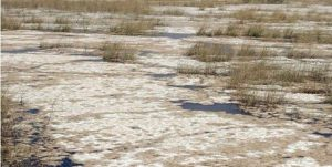 جمعی از اساتید دانشگاه چمران خواستار شدند آبگیری دائمی تالاب هورالعظیم راه کنترل سیلاب خوزستان است